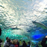 Taking the Kids to Ripley's Aquarium of Canada in Toronto, Ontario