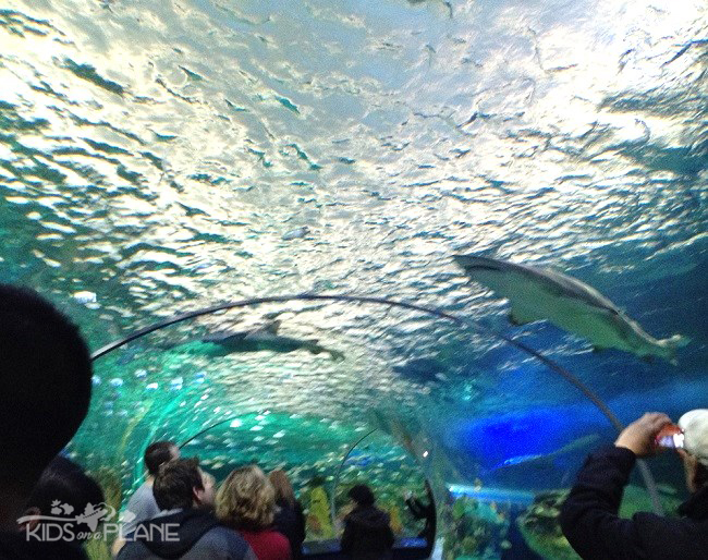 Ripley's Aquarium Toronto Review Dangerous Lagoon | KidsOnAPlane.com #Toronto #Canada #aquarium