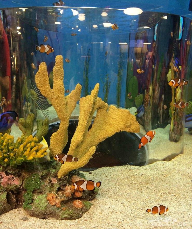 Ripleys Aquarium of Canada with Kids Review