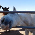 10 Reasons to Visit a Dude Ranch with Kids – White Stallion Ranch in Tucson, AZ
