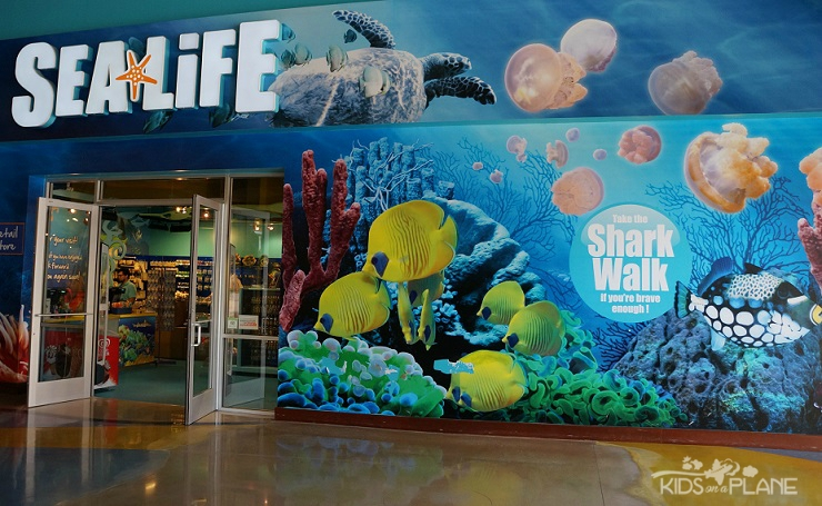 Things to Do with Kids in Grapevine Texas - SEA LIFE Aquarium in Grapvine Mills