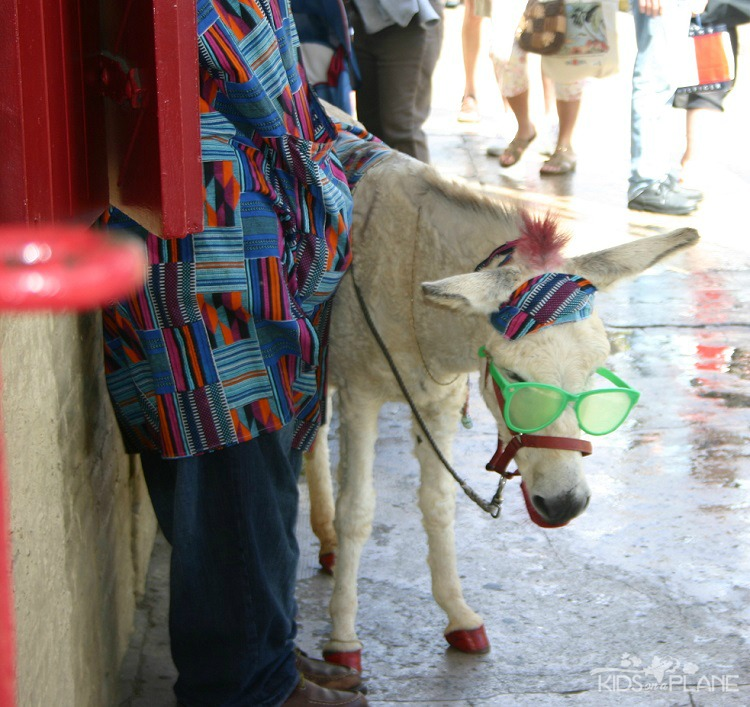 What to Do in St Thomas USVI with Kids - Oprah the Donkey