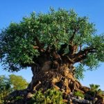 Best places to relax at Animal Kingdom Disney World